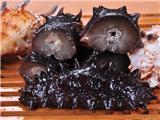 海参商标属于几类?