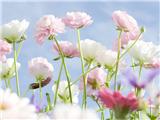 花卉商标注册属于哪个商标分类